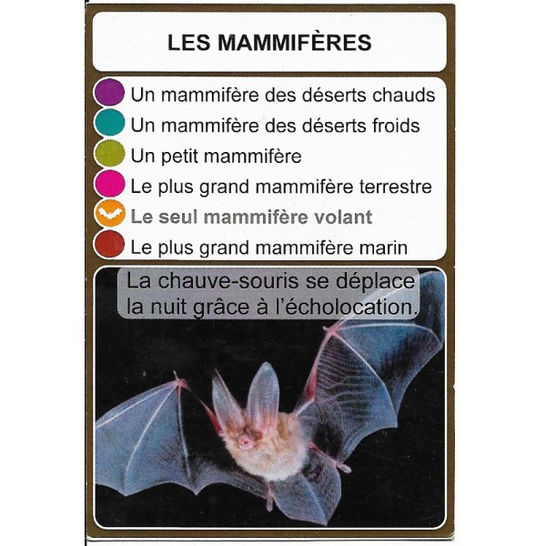 Les mammifères2- DIY - SoCartes est un jeu de société pour les enfants